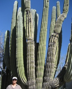 Saguaro, the grand daddy of them all