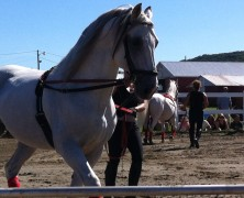 Newport Vermont, Lipizzaner – Photos